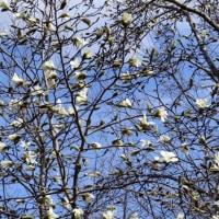 白樺♪~ 青空♪~ 南風♪~