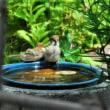 すずめちゃんの水遊び