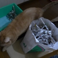 退屈な ネコ