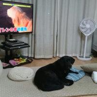 反応する犬