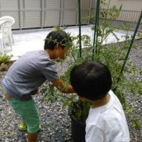 土曜日の午後を庭で過ごす