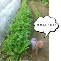 チュッちゃんの畑探検隊♪
