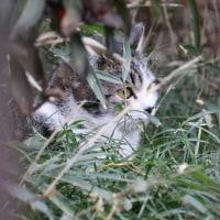 猫探訪・・潜伏