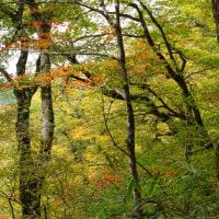 金剛山の紅葉状況