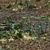 ジョグの後は恒例の赤名湿地草刈へ 2017山陰の梅雨ジョグ4