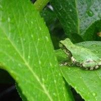 雨を喜ぶカタツムリとカエル