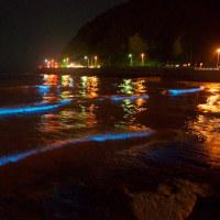 夜光虫 光る海