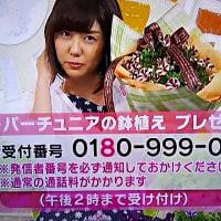 3/27・・・めざましテレビお花プレゼント本日2時まで