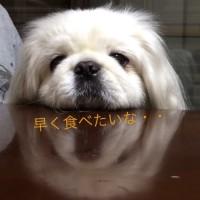 愛犬の手作りご飯♪