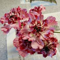 これ な~んの花?