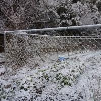 鳥獣害防止柵の網繕い