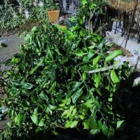 無心の庭仕事