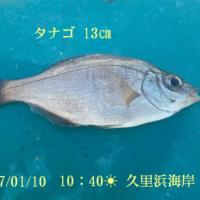 笑転爺の釣行記 1月10日☀ 久里浜海岸
