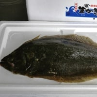 岡山の虫明漁港の魚