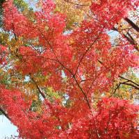 2016 飯田公園 の 紅葉