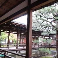【京都幕間旅情】仁和寺,梅雨時の門跡寺院旧御室御所は静寂と雨煙に霞む宸殿庭園の愉しみ