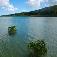水没するマングローブ 西表島