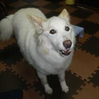老犬あいちゃんのお見舞いに里親さん宅へ行ってきました