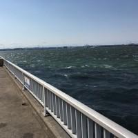 碧南海釣り公園 ボラの大群