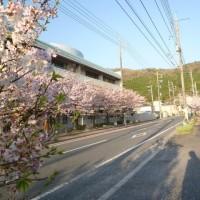 お花見しながら散歩