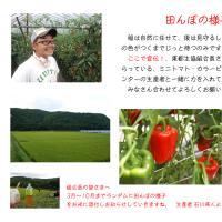 田んぼの様子8月編