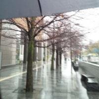 春雨の街路樹
