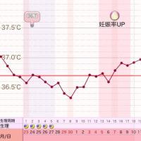 D27  高温期12日目
