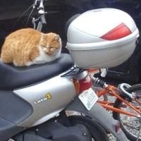 バイクの上に
