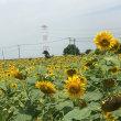 関宿の向日葵