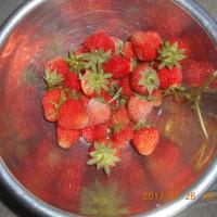 今日の収穫 イチゴ ニンニク グリーンピース スナップエンドウ ダイコン カブ ニンジン ネギ 初キュウリ