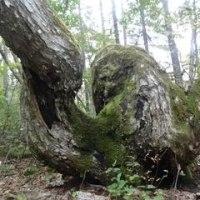 巨木は語る