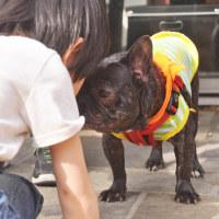 「ドッグ ライフ セイビング」による保護犬の譲渡会 (場所/GREEN DOG 代官山)