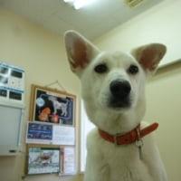 狂犬病予防注射について