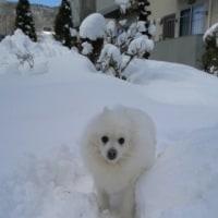 雪の中のココ