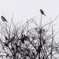 群鳥と雪ダルマ