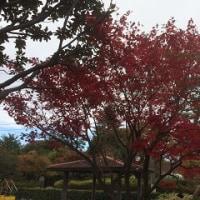 昭島市の紅葉「三景」