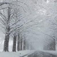 雪ちゃん、頑張っております♪ 大雪警報がでるほどに・・・(笑)