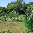 IKOI農園夏景色