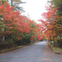 北軽井沢の紅葉など如何ですか。