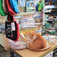梅雨真っ最中の沖縄の猫たち 2016年5月 その39