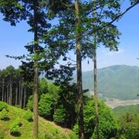 12 神ノ倉山(561m:安佐北区)登山  上りながら「白木山」を