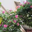 薔薇の季節