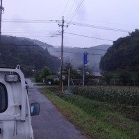 早朝に直売所のトウモロコシ畑を見回りました