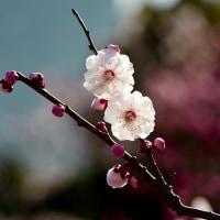 日本庭園2