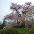 京都行ってきました(桜は満開)