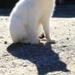 埼玉県の神社猫 2017年1月 その1