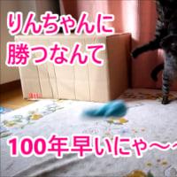 家ネコも狩りの名人~必殺技5連発