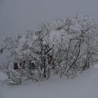 スキー 2017/01/26