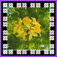 生活のちえぶくろ 花粉症対策