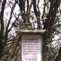 黒滝山・白滝山登山 その4